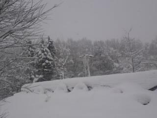 SN3P01720001雪降り.jpg